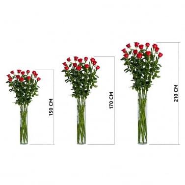 Высокие розы 100-200 см