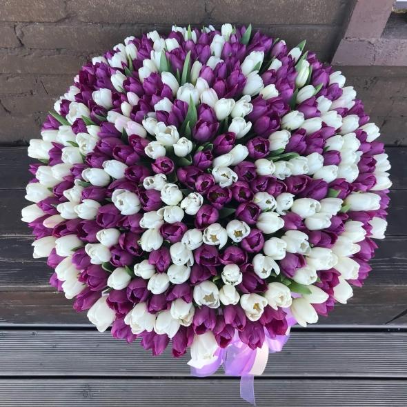 301 тюльпан в коробке