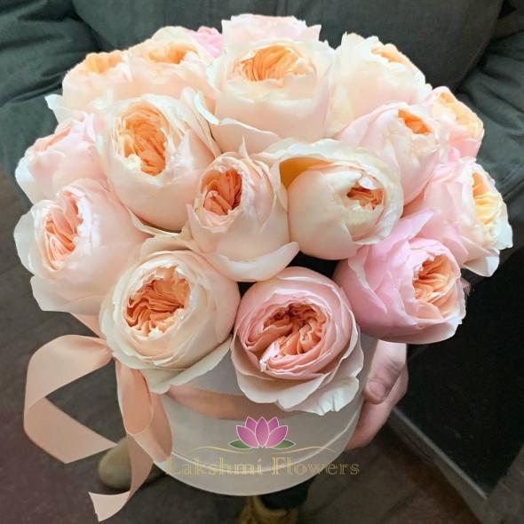 23 пионовидные розы Джульетта в коробке
