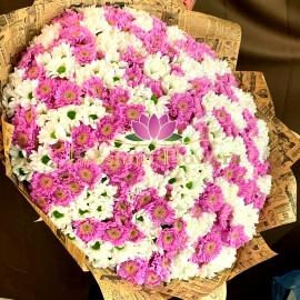 101 хризантема бело сиреневый микс