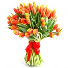 51 красно-желтый тюльпан