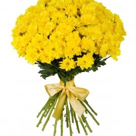 Букет из 15 желтых хризантем