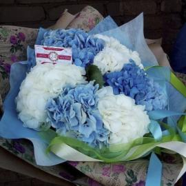 Букет из 9 голубой и белой гортензий