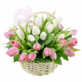 51 тюльпан розовый и белый в корзине