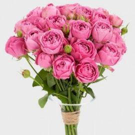 19 пионовидных роз «Мисти Баблс»