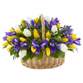 Корзина желтых и белых тюльпанов с ирисами