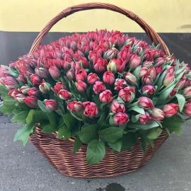 301 красный пионовидный тюльпан в корзине