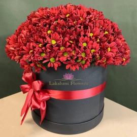 35 кустовых хризантем в коробке