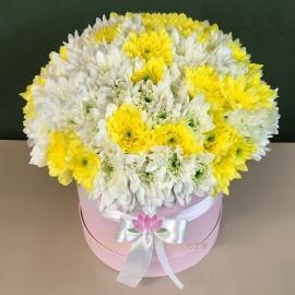 35 белых и желтых кустовых хризантем в коробке