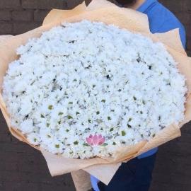 Букет из 101 кустовой белой хризантемы